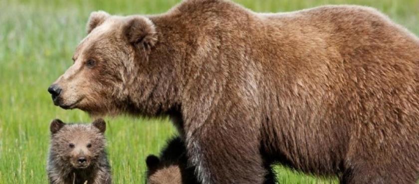laquila-orso-marsicano-impaurisce-tre-donne_1355489