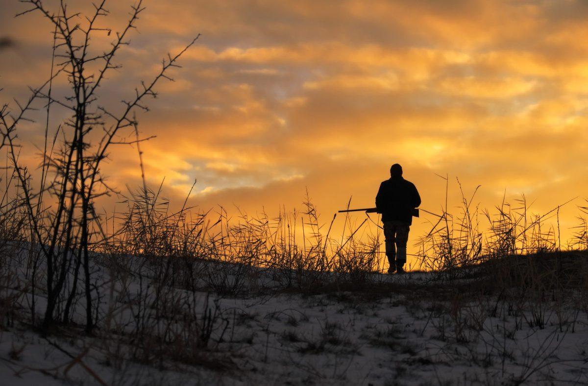 Richiesta di misure urgenti per la gestione della fauna in conseguenza delle normeanti-Covid
