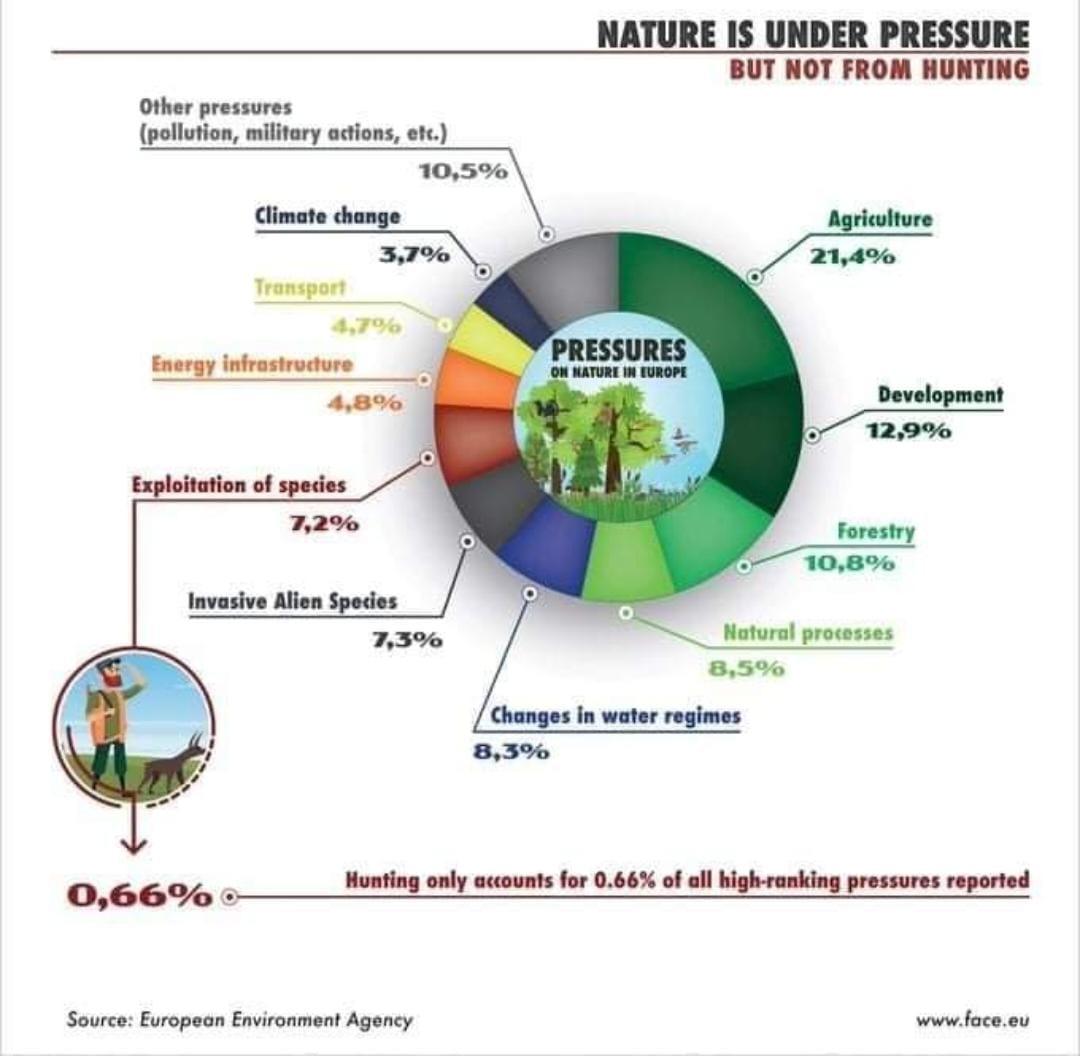L'Agenzia Ambientale UE conferma l'impatto minimo della caccia per specie eambiente